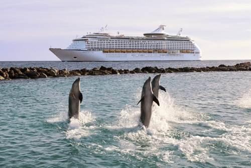 דולפינים בקוראסאו